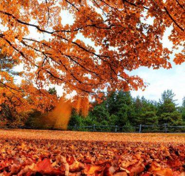 Como manter a qualidade do ar no outono?